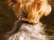 フリーステッチのヌメカラーをつけている愛犬