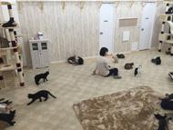 譲渡型猫カフェ にゃんくる 蒲田店